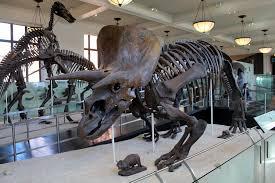 Jurassic Park: The Caveats of De-Extiction